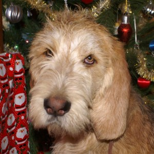 Badger, Christmas 2009