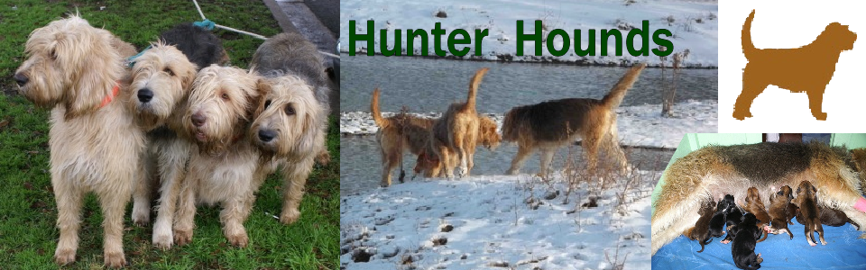 About Hunter Hounds