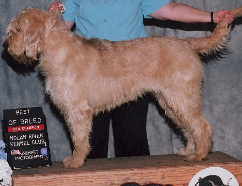 Abilene Champion Otterhound