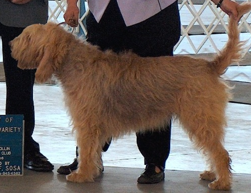 Nicky Champion Otterhound