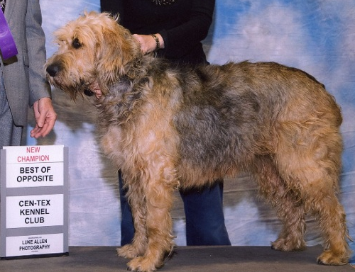 Pris Champion Otterhound