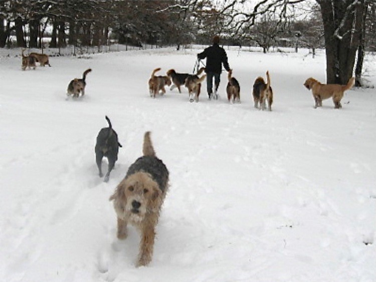 The Pack in the Snow Jan 2011