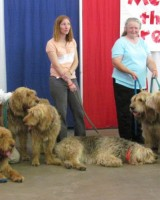 July 2014 Harvey Is a Champion Otterhound