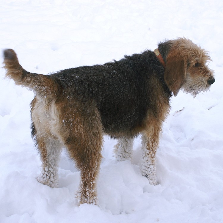 Barclay in the Snow Feb 2010