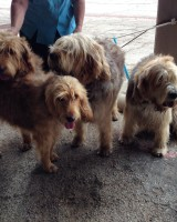 Hunter Otterhounds and Six Wins