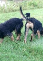D Litter Otterhounds Learning Tracking