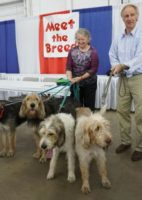 March Otterhound News