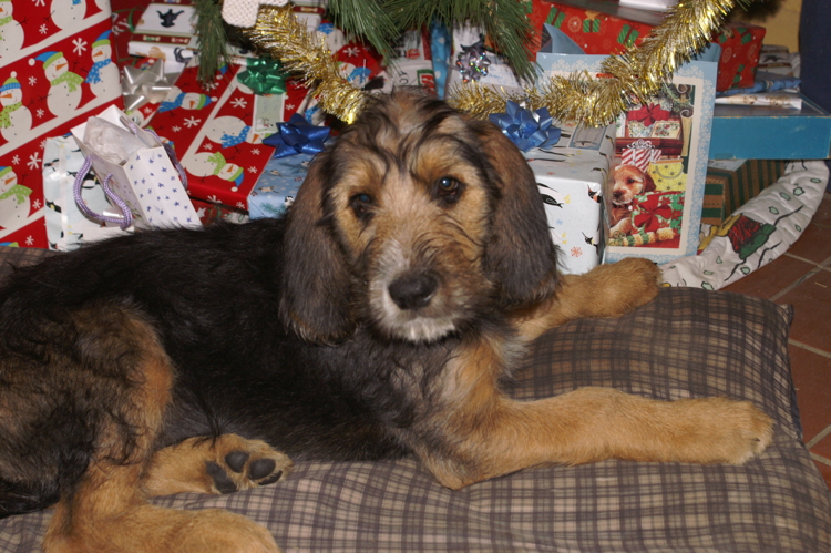 Christmas Otterhound Girls