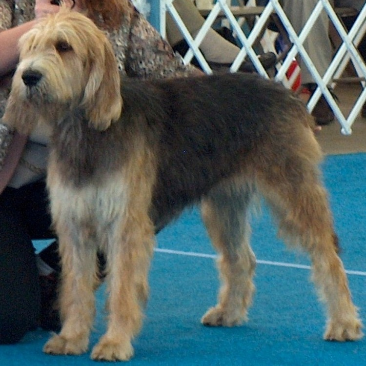 Quick at a Dog Show Sept 2006