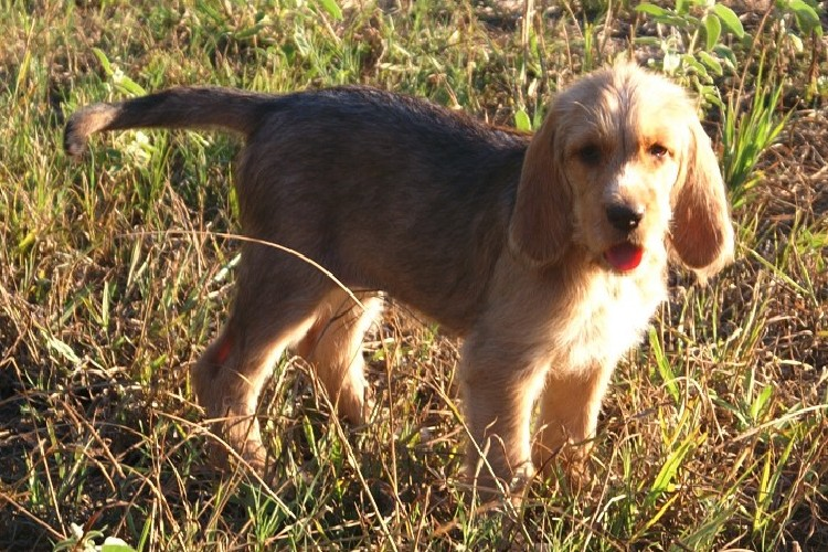 Abilene Puppy