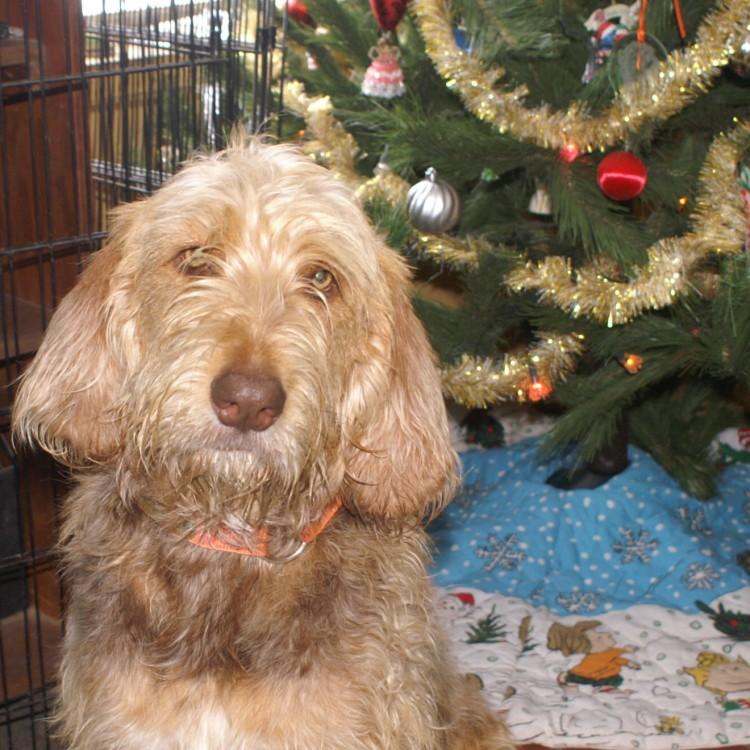 Clara Christmas Dec 2012