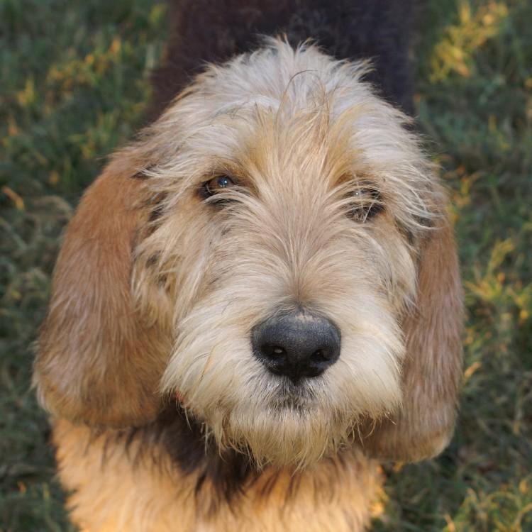 Bonney face Nov 2009