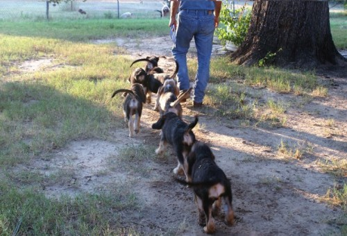 2009 B Litter Pups to Pond