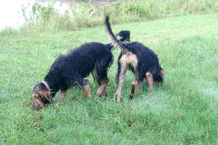 D Litter Otterhounds Learning Tracking